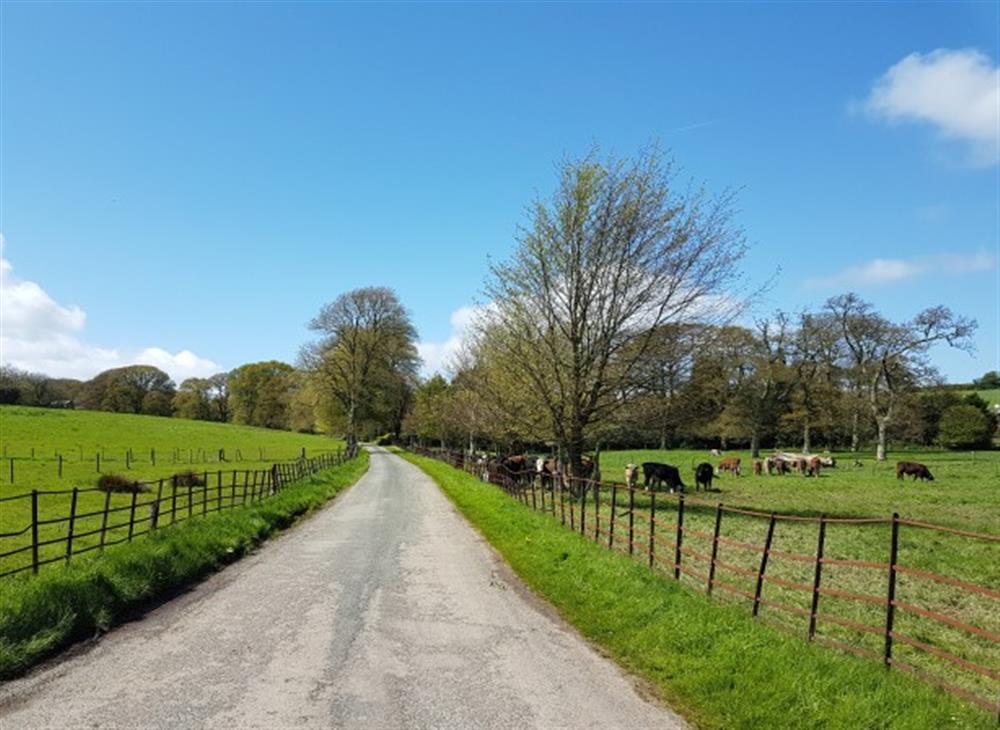 The entrance drive to Fallapit Estate at 4 Bouchard, East Allington