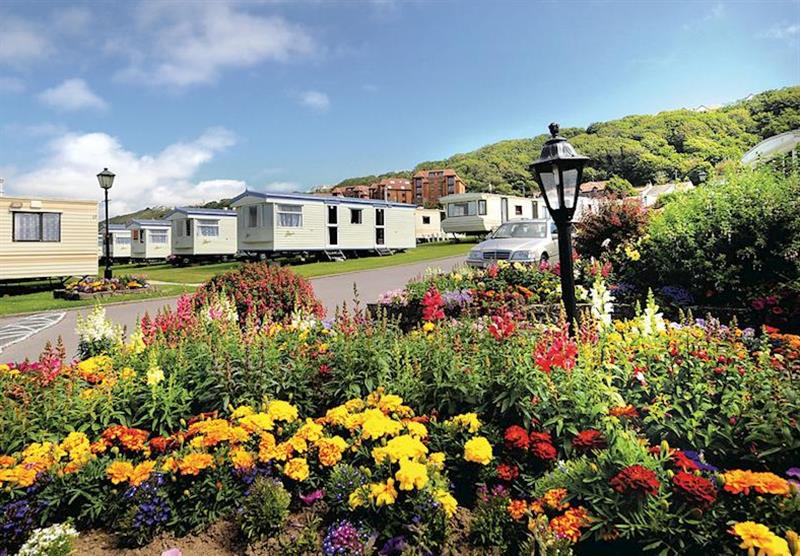 The park setting at Beachside Holiday Park in Devon, South West of England