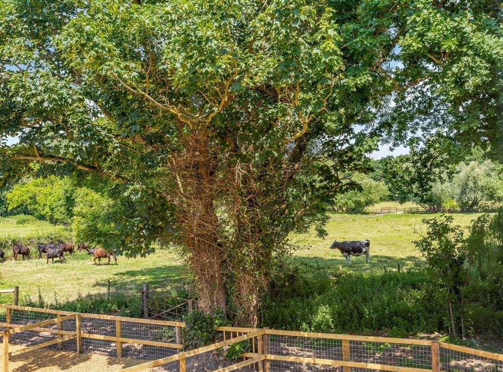 View at Alderfen Barn,