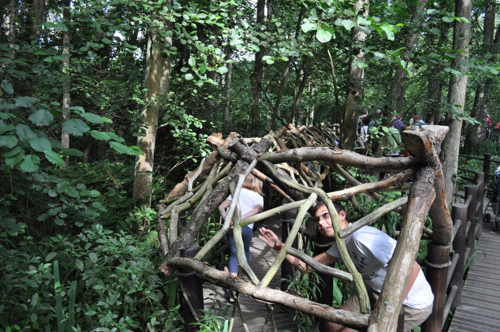Start exploring BeWILDerwood