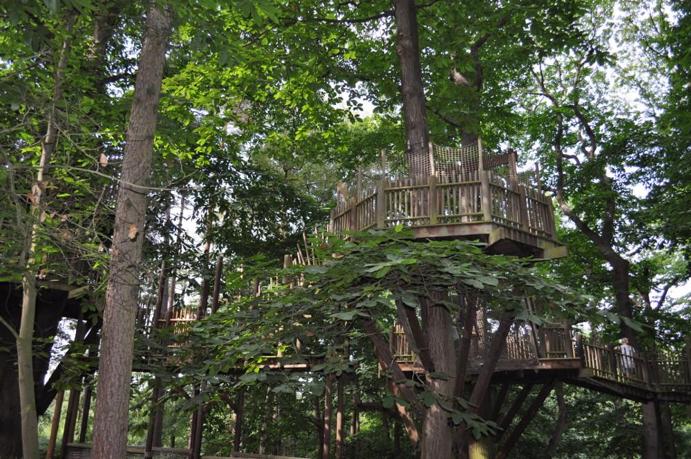 Walk through the trees at BeWILDerwood
