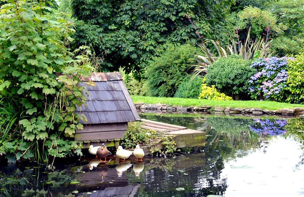The duck pond at Buckland Court at Blackberry Cottage, Slapton