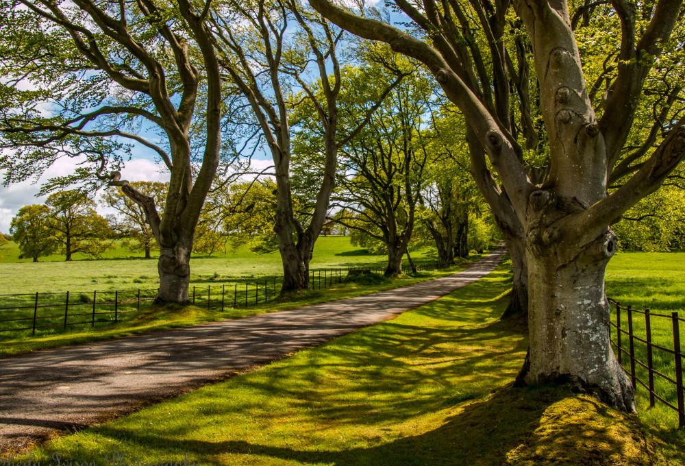 The driveway leading to Blaithwaite House at Blaithwaite Estate in Waverton, near Wigton, Cumbria