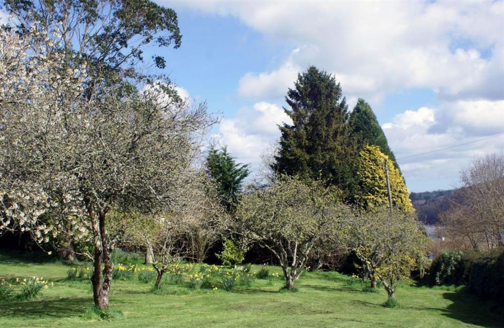 Garden at Bows, Dittisham, South Hams