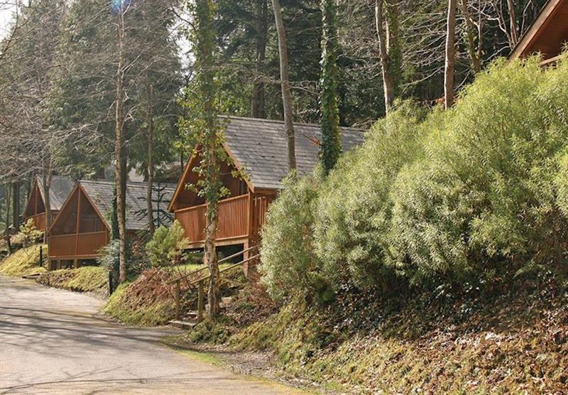 The park setting (photo number 3) at Bulworthy Forest Lodges in North Devon, South West of England