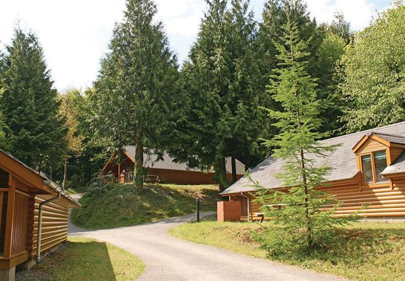 The park setting (photo number 4) at Bulworthy Forest Lodges in North Devon, South West of England