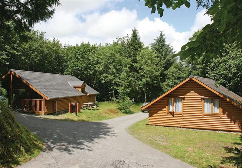 The park setting (photo number 5) at Bulworthy Forest Lodges in North Devon, South West of England