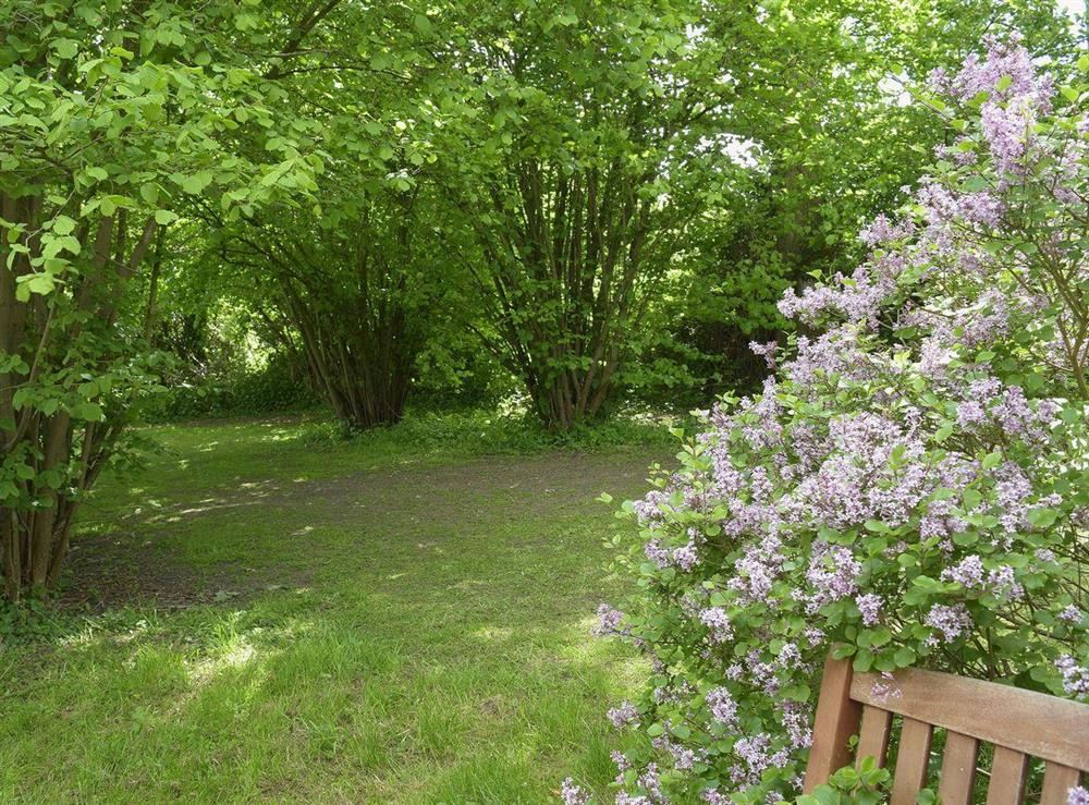 Unspoilt woodland with shady walks in the 6 acres of surrounding land at Butter Pen in Denton, near Bungay, Norfolk