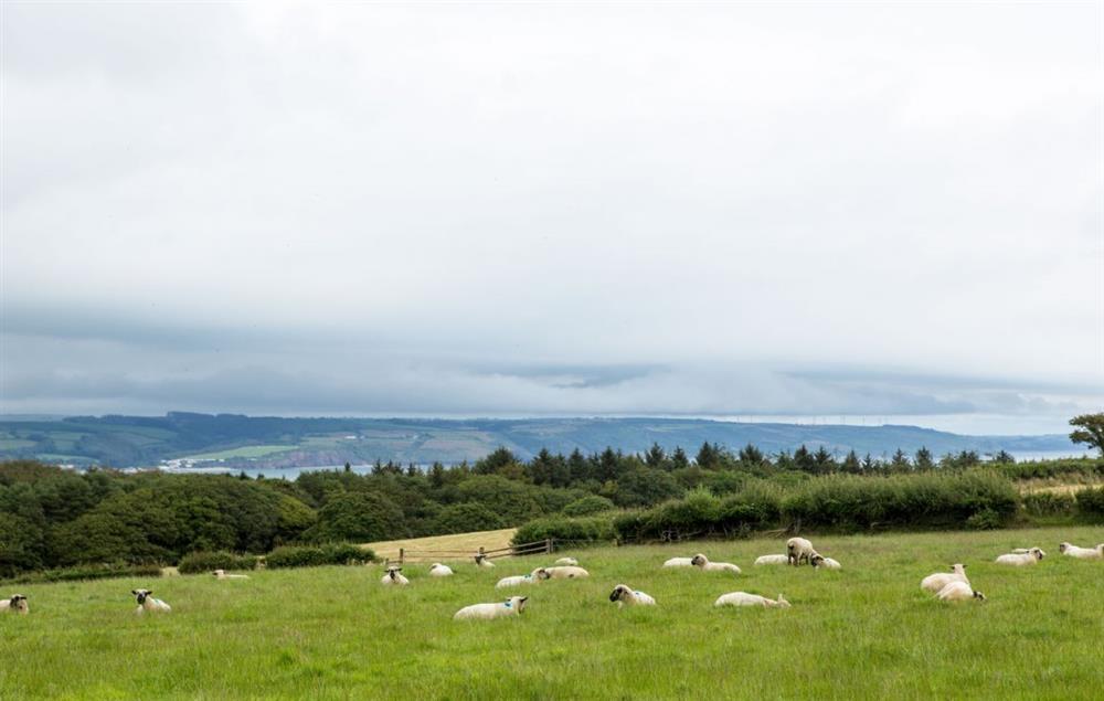 Views from Clicketts Heath