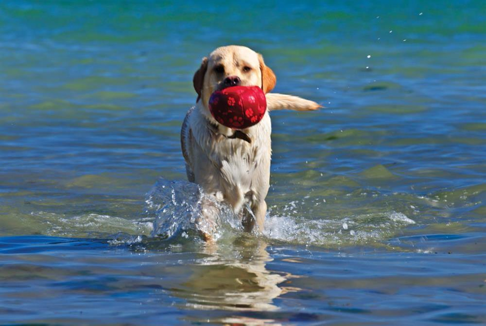 Crew House will accept one well behaved dog at Crew House in Dart Marina, Dartmouth