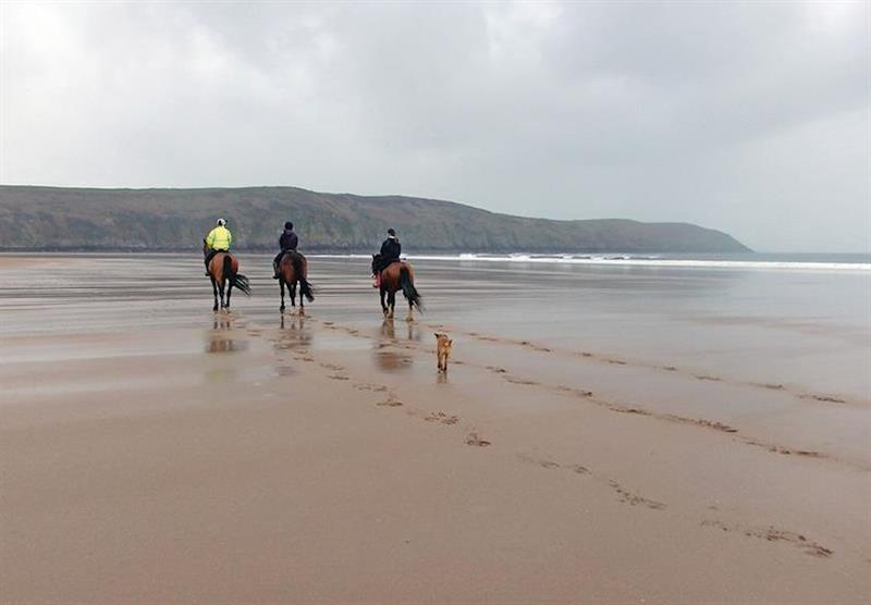 Horses on the beach at Croyde beach at Croyde Coastal Retreats in Croyde, North Devon