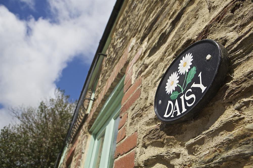 Daisy (photo 3) at Daisy in Blackawton, Dartmouth