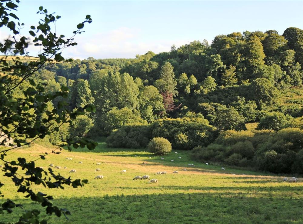 View from Edgecombe Barn at Edgecombe Barn in Bow Creek, Nr Totnes, South Devon., Great Britain