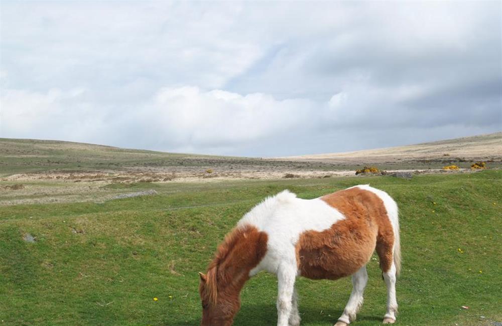 Local wildlife at End O Moor, Shaugh Prior