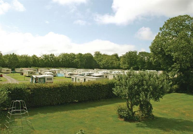 The park setting (photo number 2) at Forest Glade Holiday Park in Kentisbeare, Nr Exeter, Devon