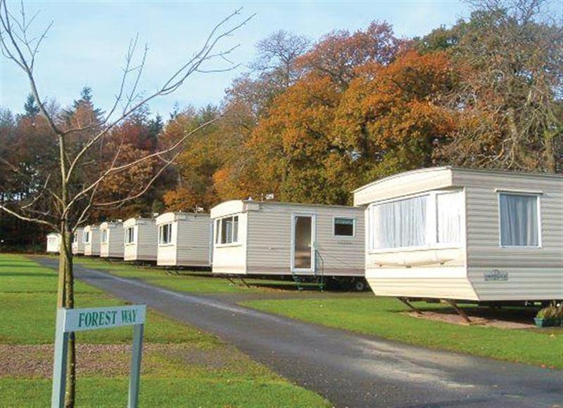 The park setting at Forest Glade Holiday Park in Kentisbeare, Nr Exeter, Devon