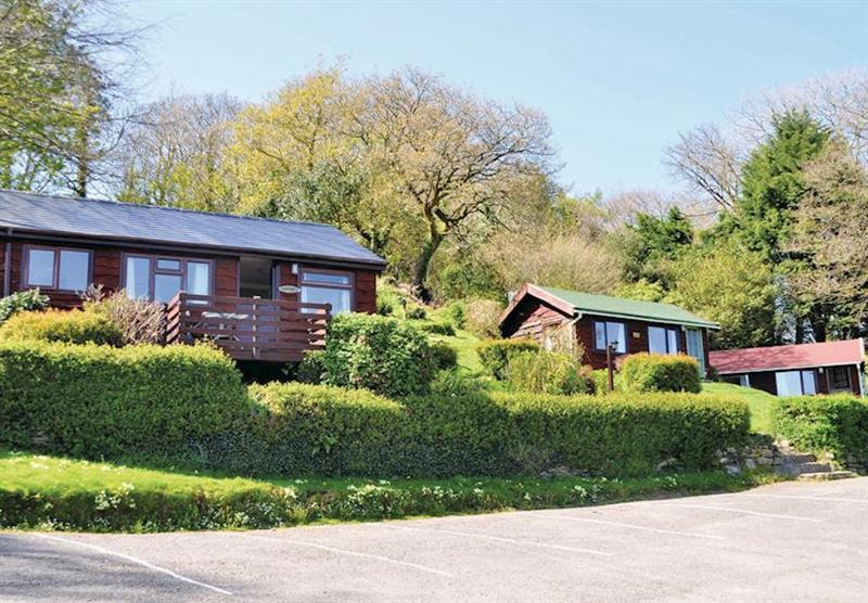 The park setting at Grattons Cedar Lodges in Devon, South West of England