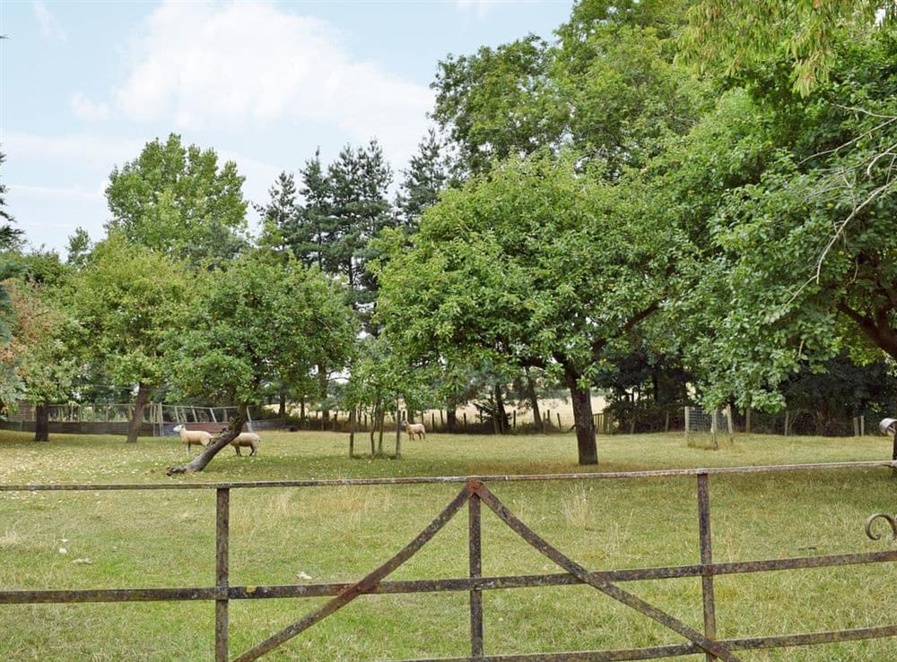Lovely orchard on the grounds at Ash Barn,