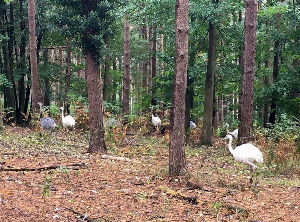 Free-roaming birds within the woodland