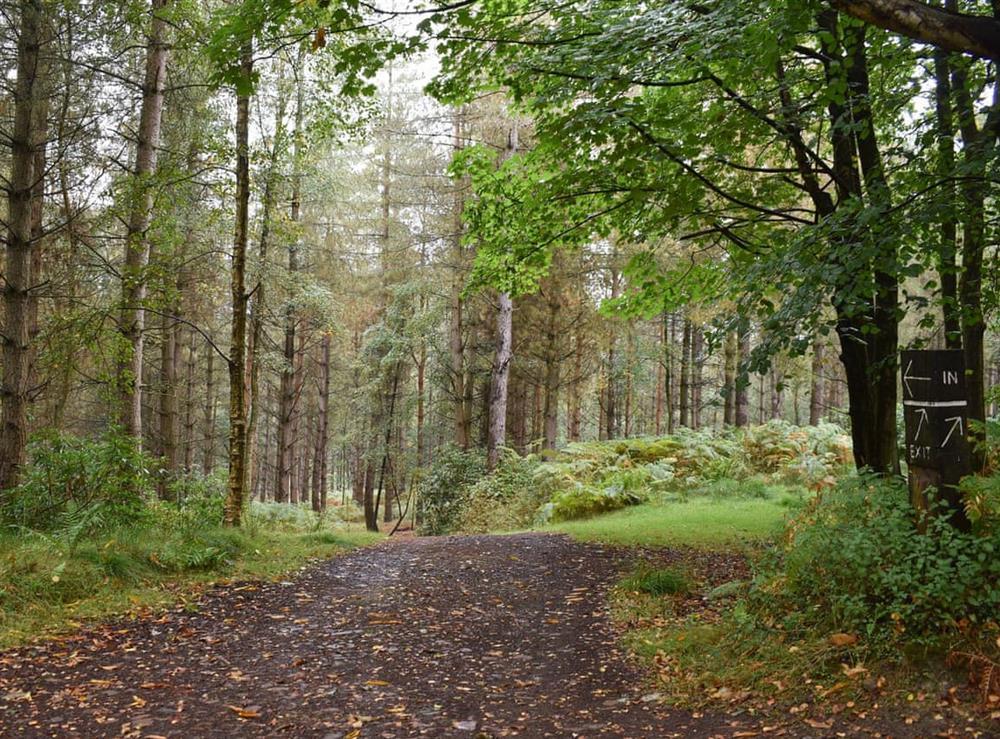 Woodland walks around the estate