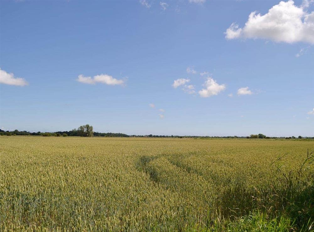 Panoramic rural views at Marsh Farmhouse in Acle, Norwich, Norfolk