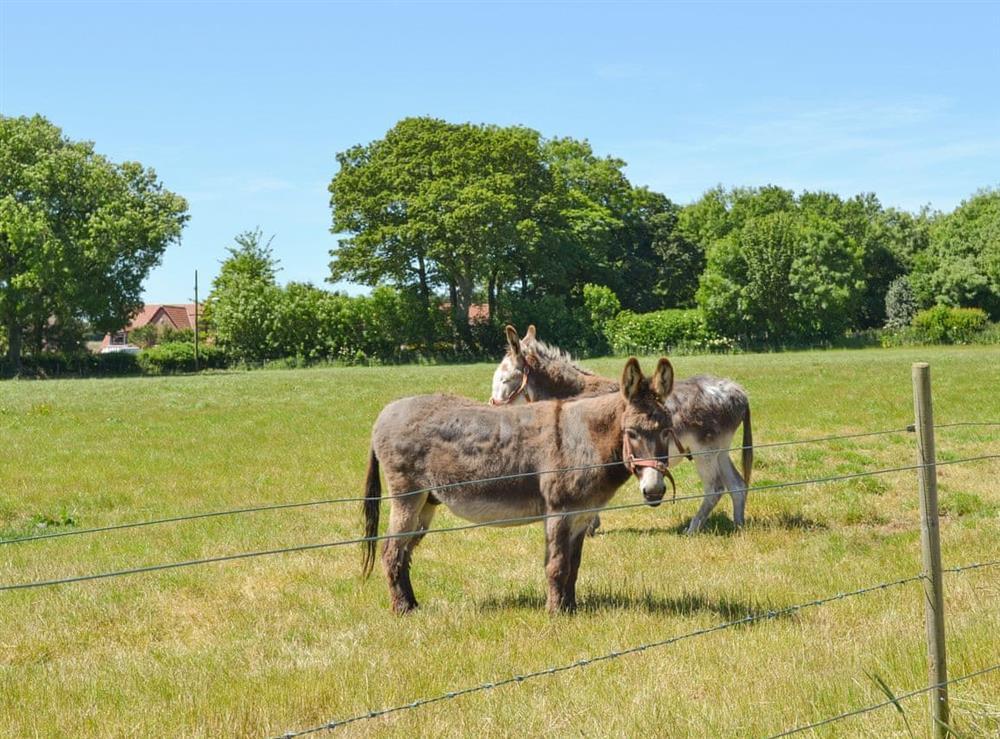 Friendly animals around the working farm at Belgian Cottage,