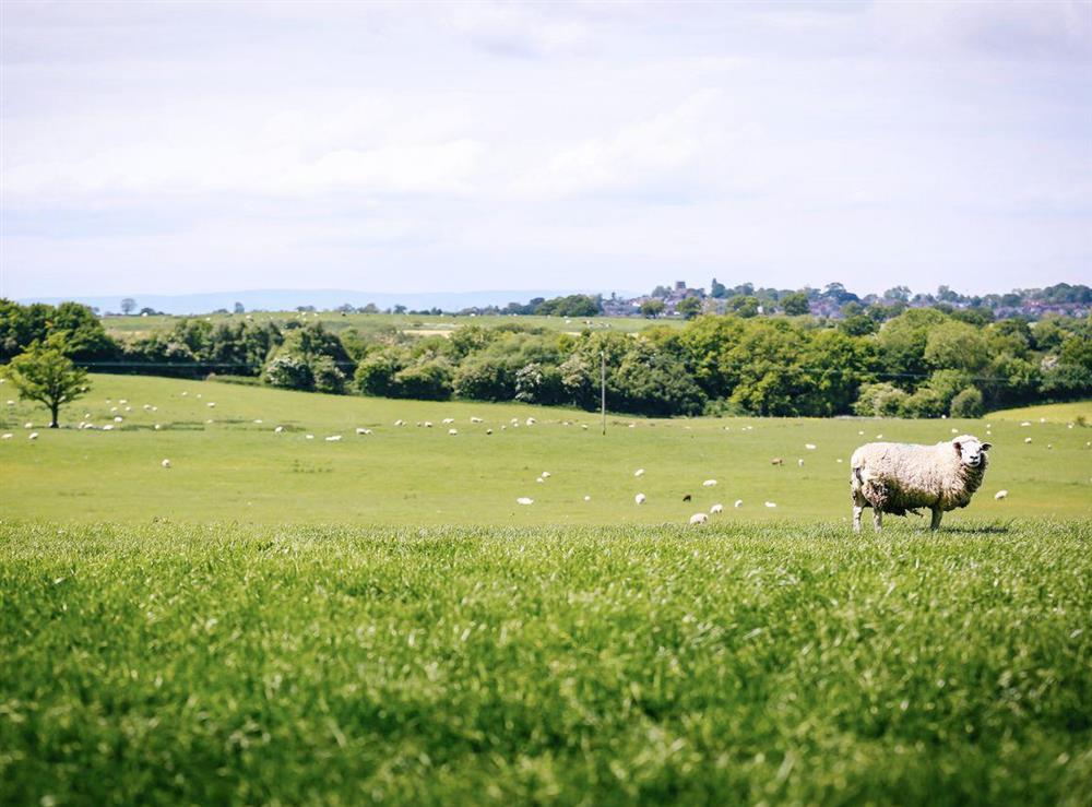 Panoramic rural views at Millers House,