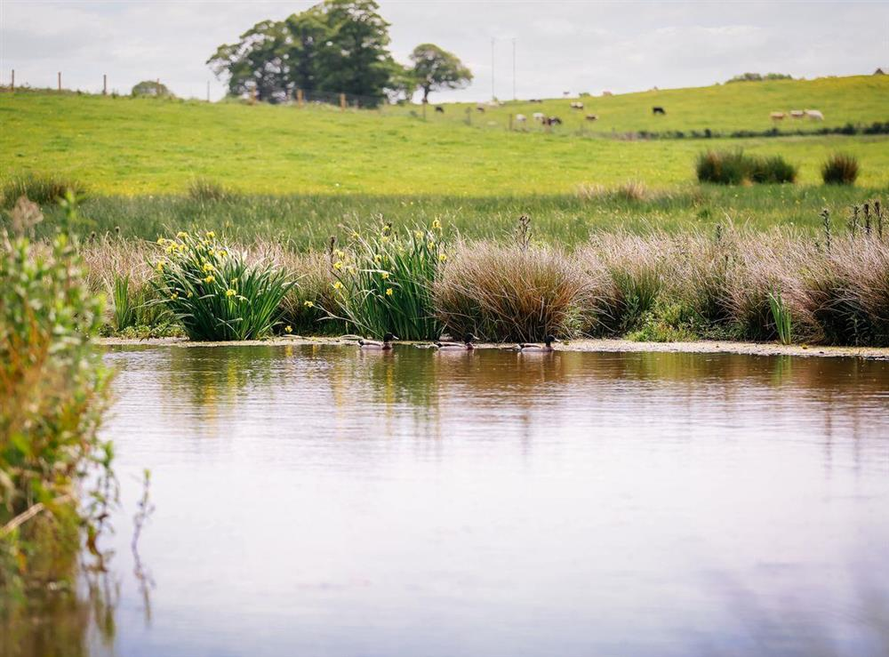 Pond in farmland at Millers House,