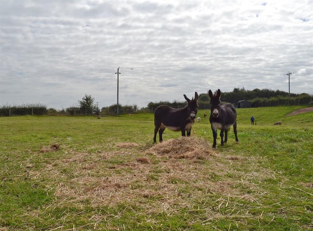 Onsite animals (photo 2) at Moss Hall Barn in Rushton, near Tarporley, Cheshire