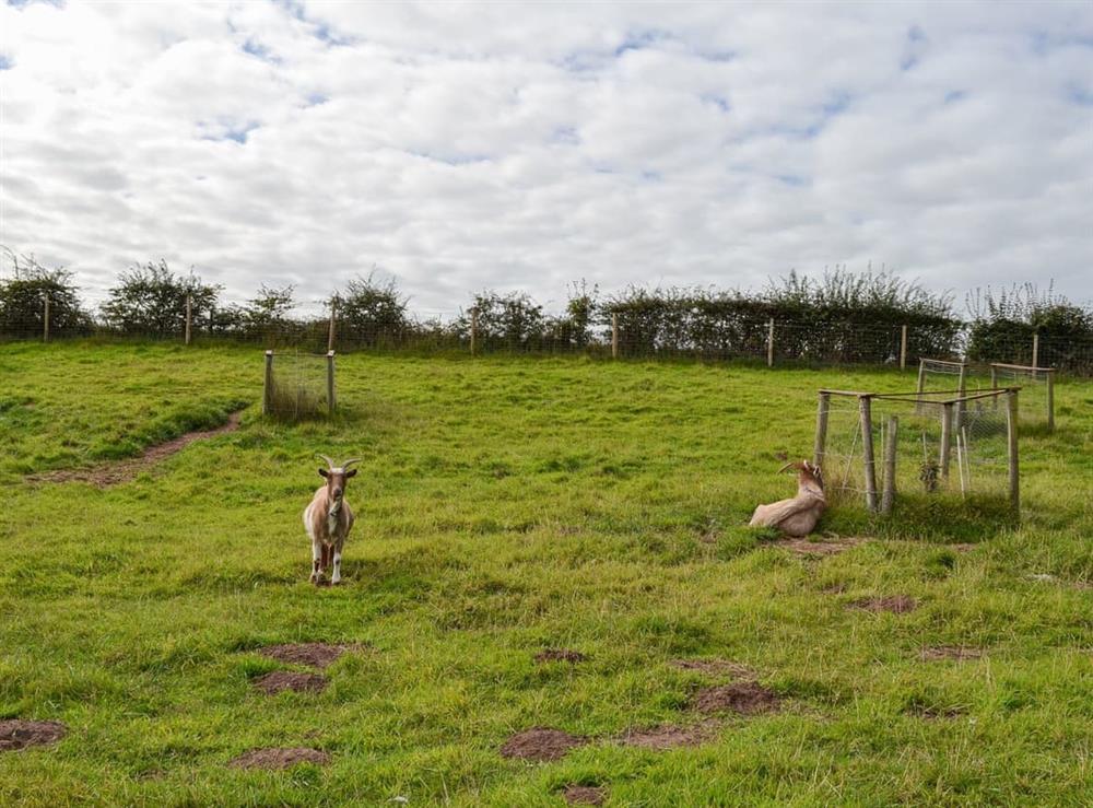Onsite animals (photo 3) at Moss Hall Barn in Rushton, near Tarporley, Cheshire