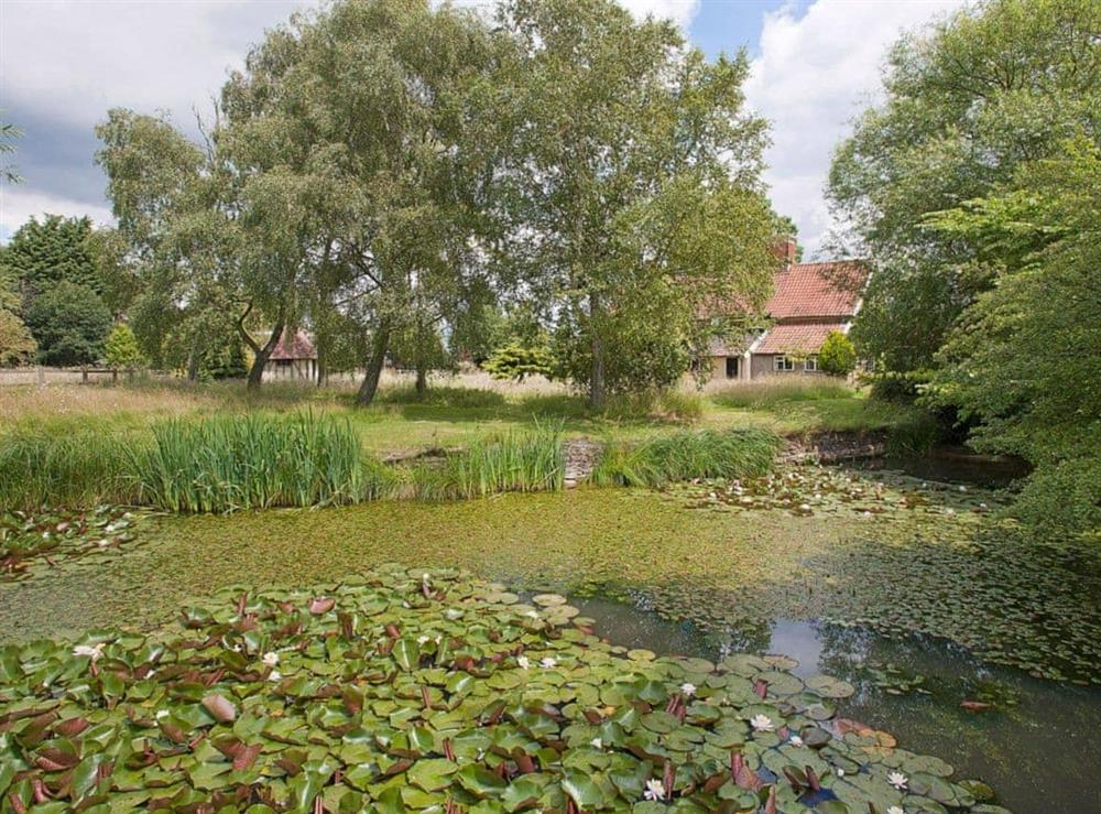 Garden and grounds at Old Hall Farmhouse in St Nicholas, Harleston, Norfolk., Great Britain