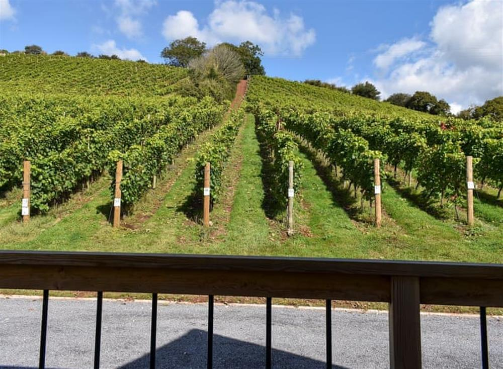 Views from Auxerrois at Old Walls Vineyard Lodges