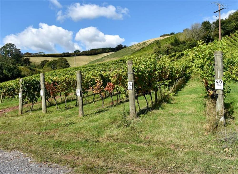 Views from Rondo at Old Walls Vineyard Lodges