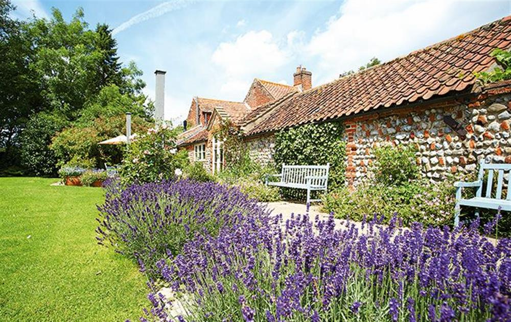 Beautiful, lawned garden at Pear Tree Cottage, Wickmere