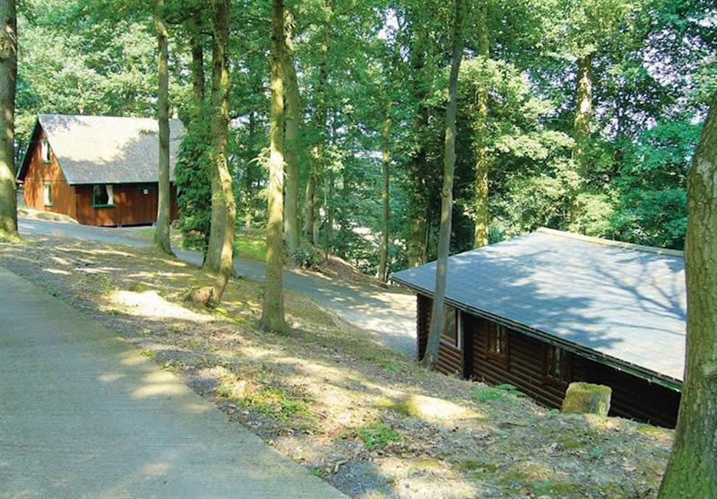 The woodland setting at Penllwyn Lodges in , Mid Wales