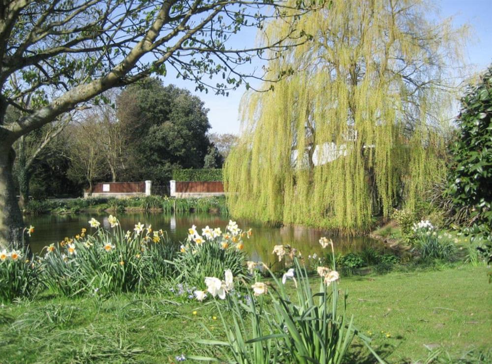 Lovely garden with pond at Pond Cottage in Somerleyton, near Lowestoft, Suffolk