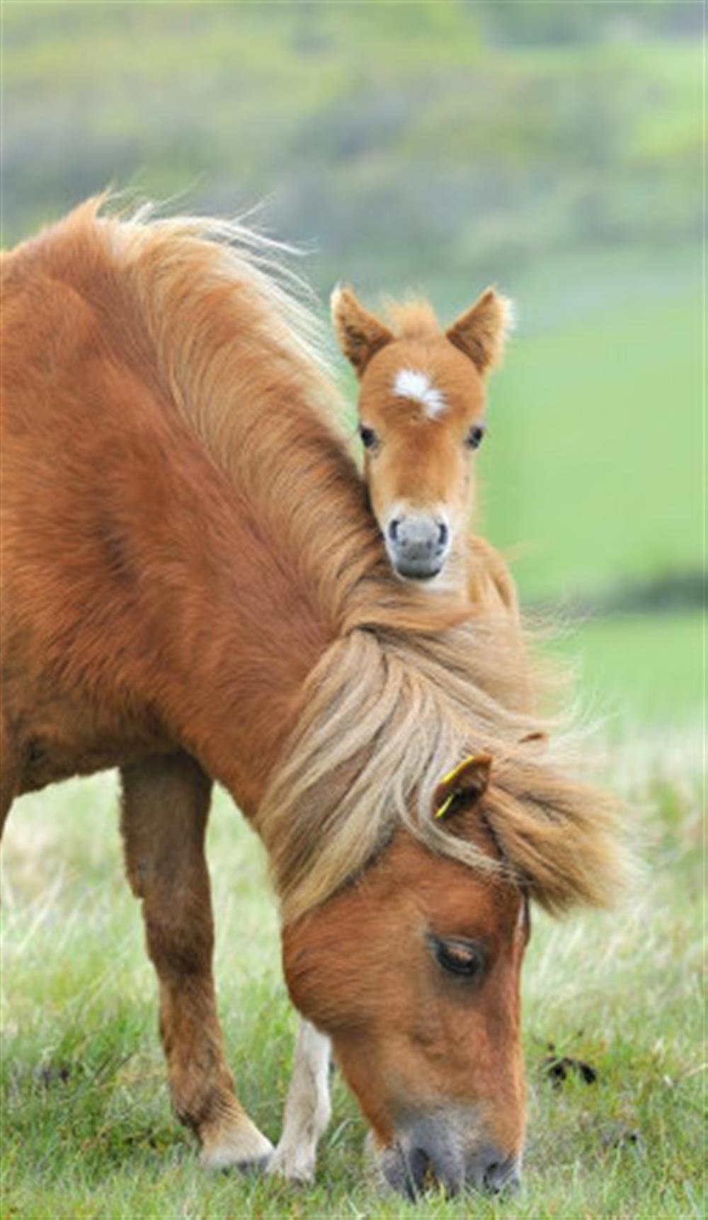 Foal at Preston House Barn, Moreleigh