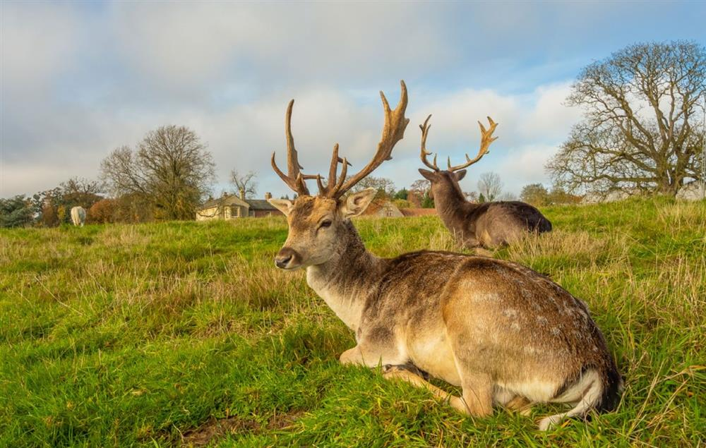 The parkland is shared with hand-fed, friendly deer which come and visit morning, noon and twilight on their way to the pond for a drink