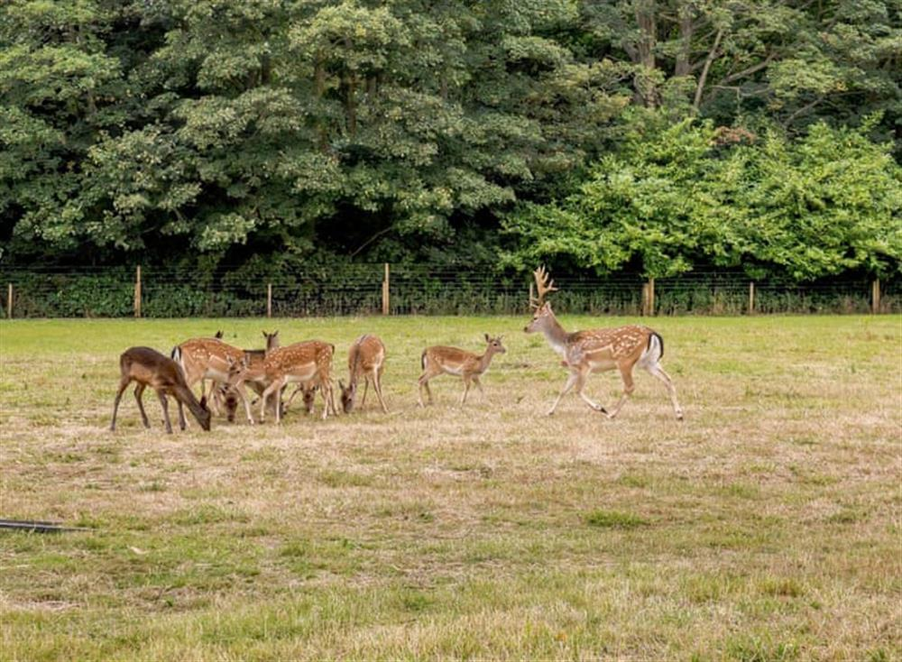 Local wildlife within the grounds at Deer View Cottage,