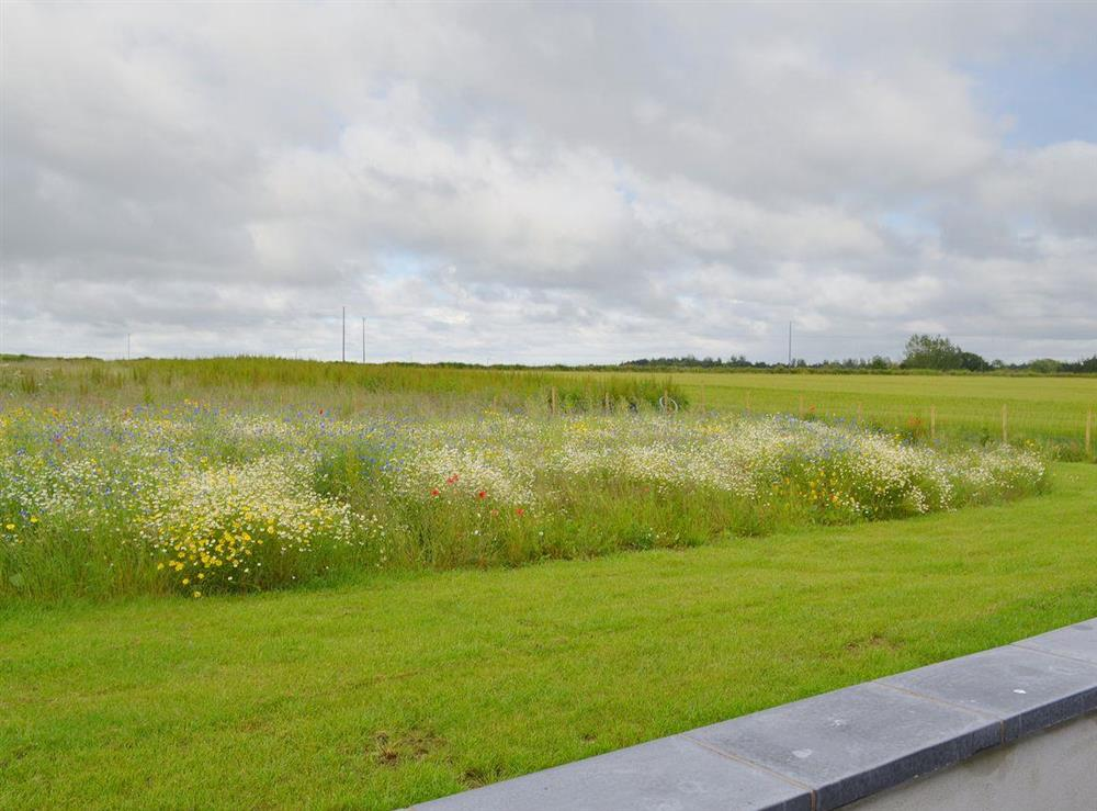 Charming views over wild flower meadows and rolling Norflok countryside at Seaglass Barn in East Ruston, near Stalham, Norfolk