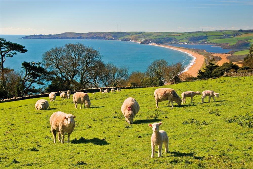 Explore the beautiful Devon Coastline at Seaway House in , Strete