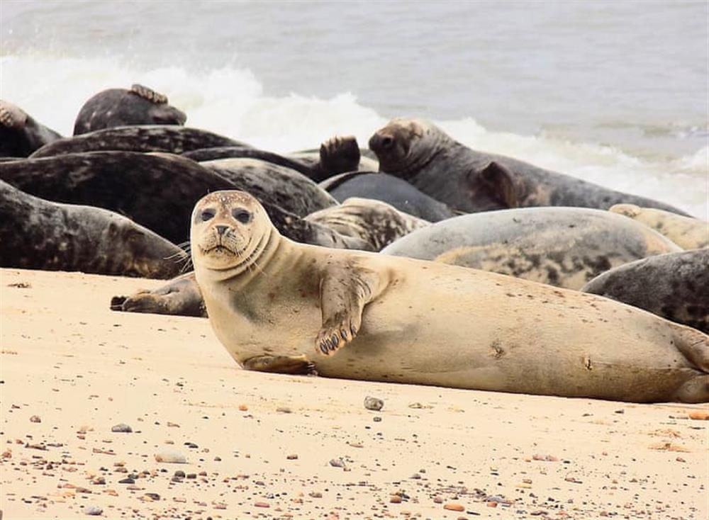 Seals pull themselves out of the sea onto the golden sand