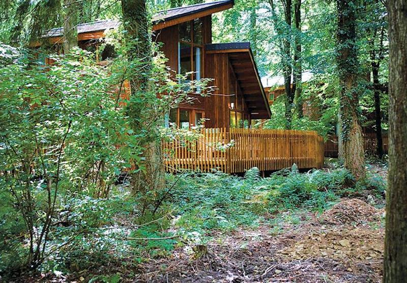 Secluded lodges at Sherwood Forest Lodges in Sherwood Forest, Nr Edwinstowe, Nottinghamshire