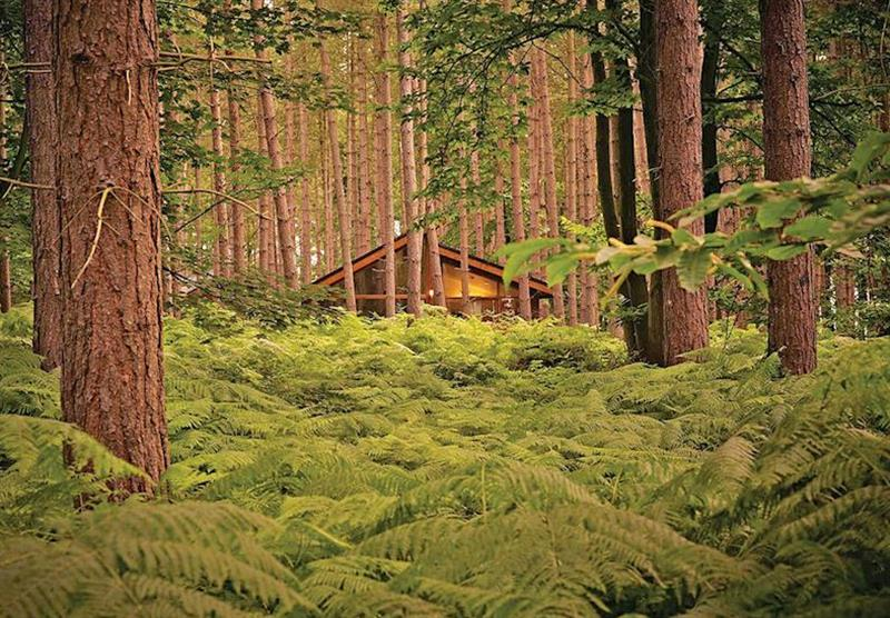 The park setting at Sherwood Forest Lodges in Sherwood Forest, Nr Edwinstowe, Nottinghamshire
