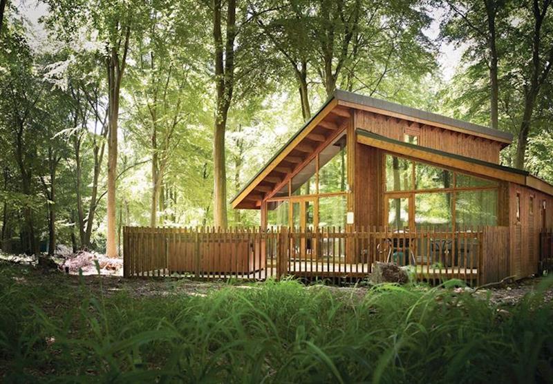 Typical Golden Oak Hideaway at Sherwood Forest Lodges in Sherwood Forest, Nr Edwinstowe, Nottinghamshire