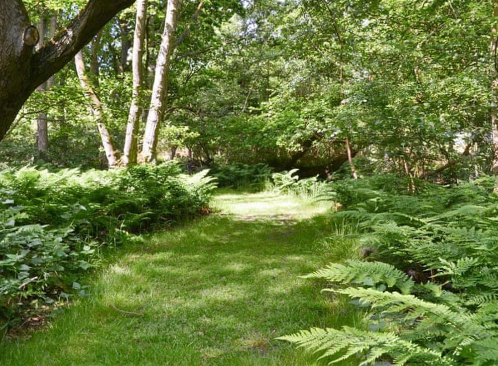 Shared gardens and grounds (photo 2) at Oak View Lodge,