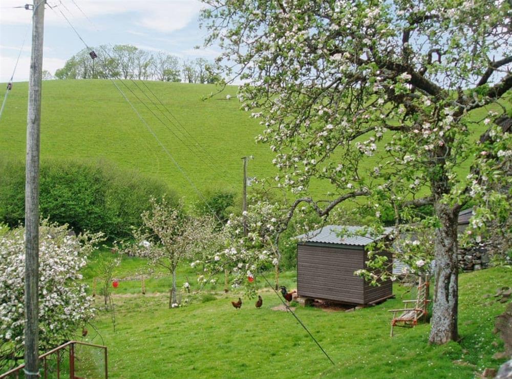 Orchard at Stonehills Farmhouse in Washbourne, Nr Totnes, South Devon., Great Britain