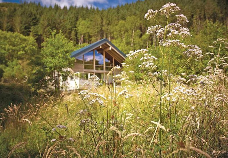 The park setting at Strathyre Lodges in Callander, Perthshire & Southern Highlands