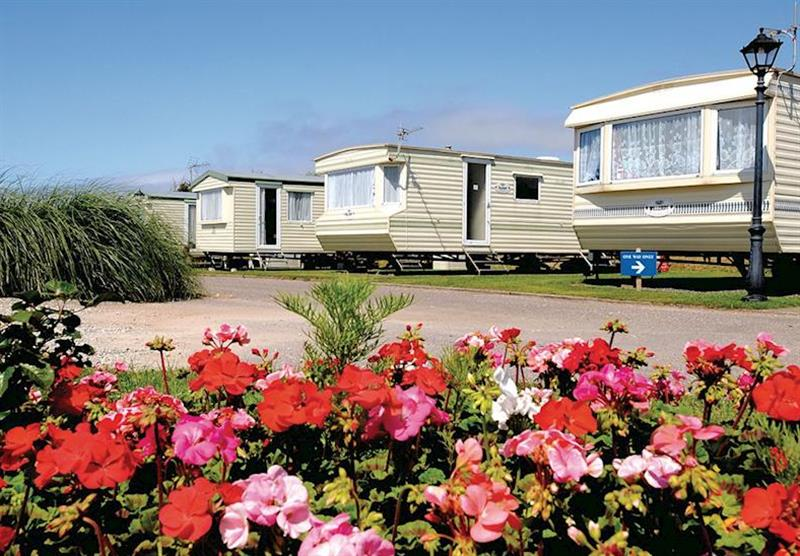 The park setting at Surf Bay Holiday Park in Devon, South West of England