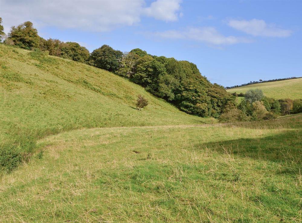 Field near fishing lake at Tarragon Cottage in Kingswear, Nr Dartmouth, South Devon., Great Britain